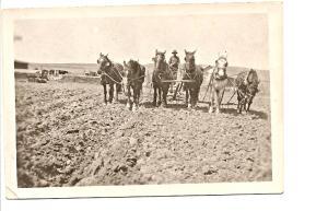Horses Farming 1900