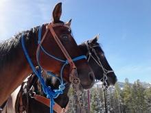 Alert horses